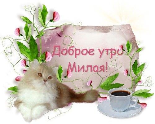 Пожелание с добрым утром любимой открытки, другу для хорошего